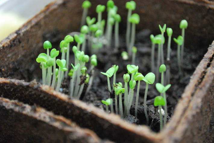February Gardening Tips - What to Plant in February - Quiet Corner