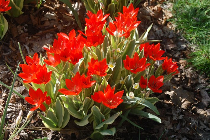 What to Grow in the Shade Garden