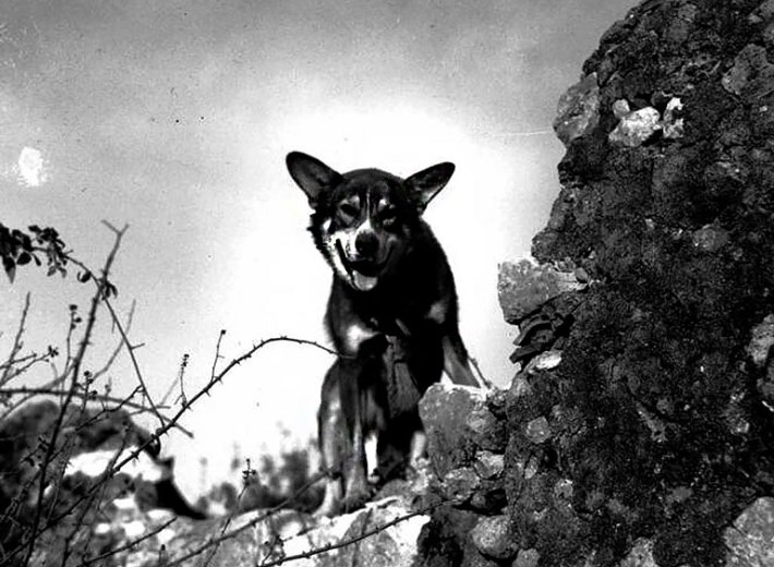 Top 5 Most Heroic Dogs in History