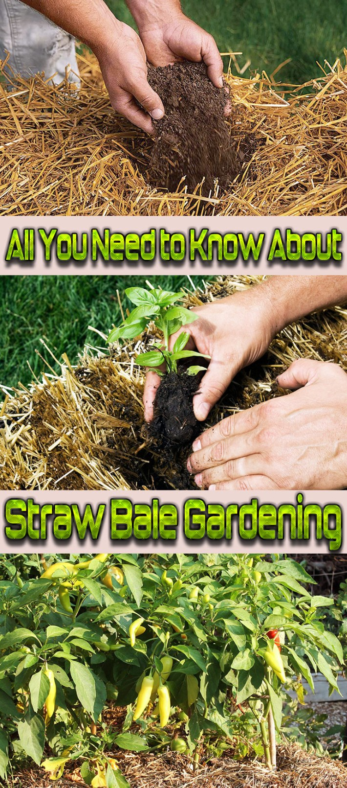 All You Need to Know About Straw Bale Gardening