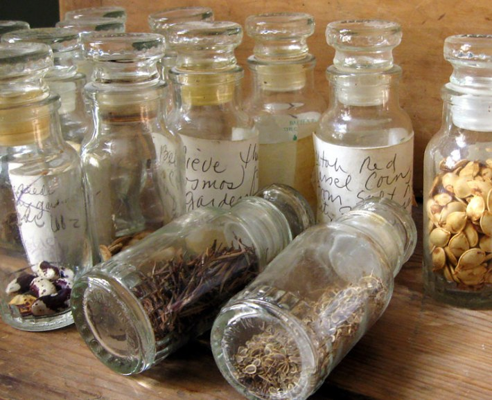 Everything You Need to Know About Saving Seeds