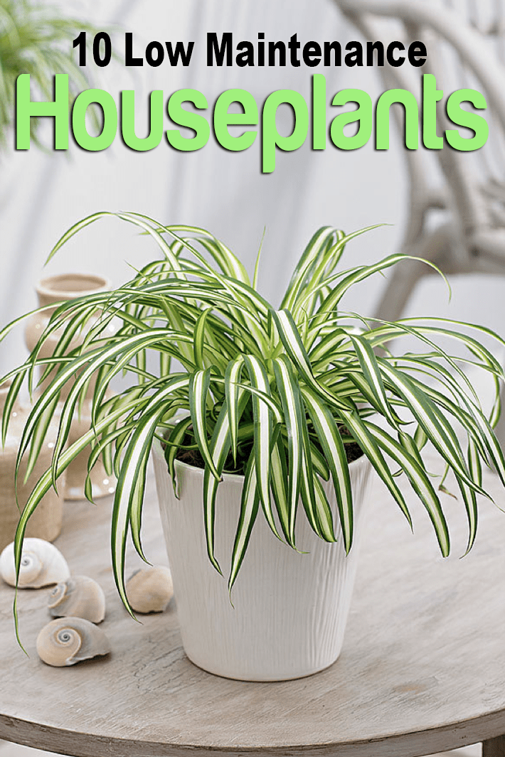 10 Low Maintenance Houseplants for Black-Thumb Gardeners