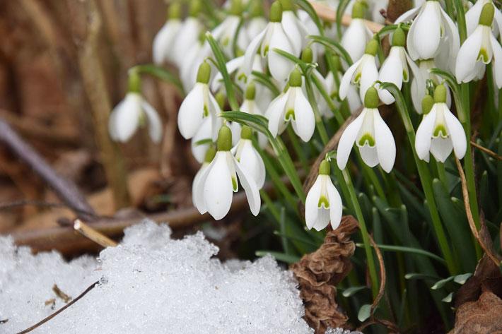 March Gardening Guide: March Garden Tasks in Your Region 2