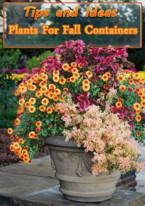 Plants For Fall Containers - Tips and Ideas