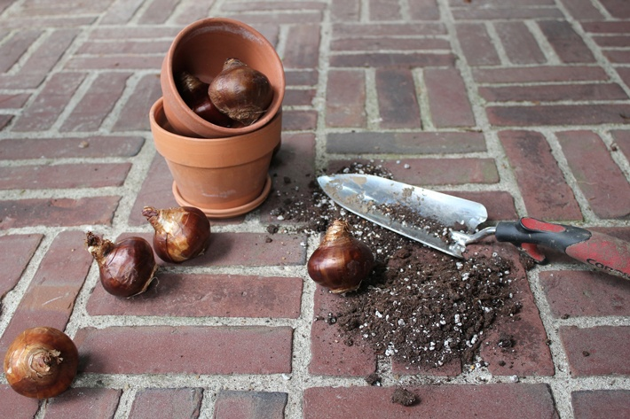 Summer bulbs - When and How to Plant