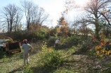 Landscaping Forest Park