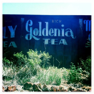 8 Goldenia tea_1928