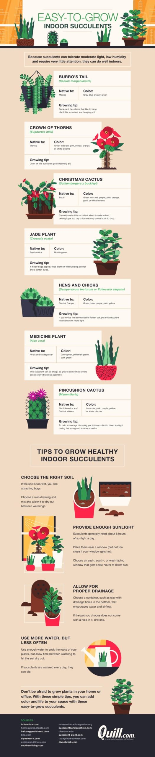 Easy-to-grow indoor succulents