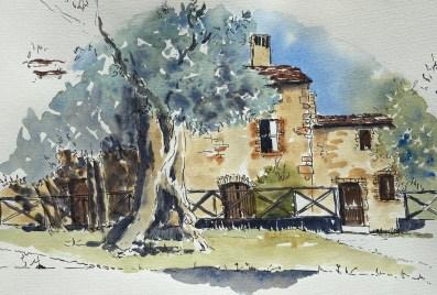 The Old Olive Tree, Monteriggioni