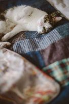 Rufus the cat loves his quilt