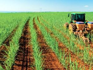cultivos agricultura fertilizantes
