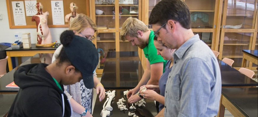 Students working on placing parts of the body on a skeleton