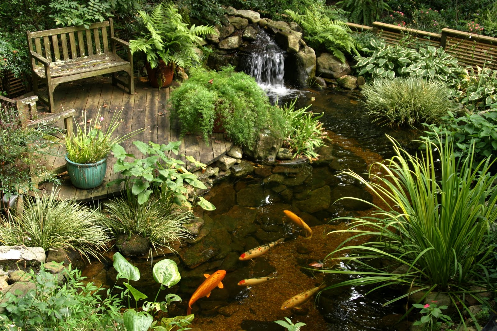 Quinju Koi Pond with Waterfall - quinju.com