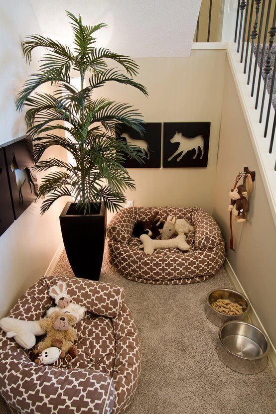 Basement Renovation Ideas with your pet in mind - quinju.com
