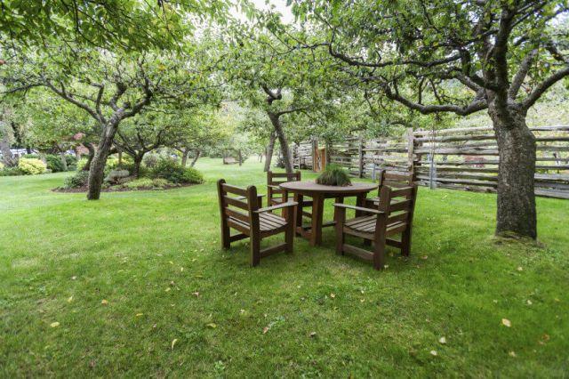 backyard trees, backyard design planning, quinju.com