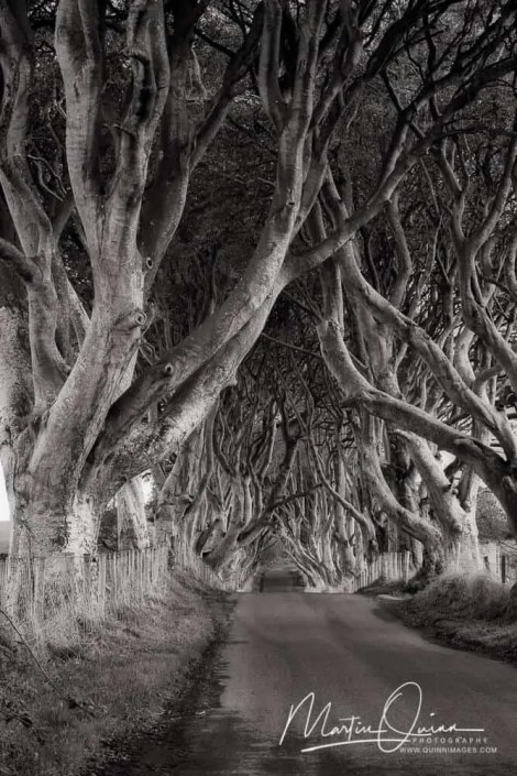 Dark Hedges BW
