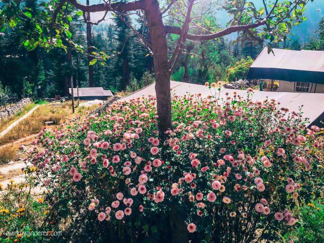 Kinner camps gardens