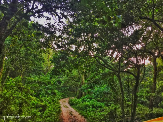 forests of chitwan nepal