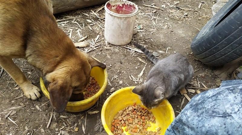 Urbanimal y comunidad entregan alimento