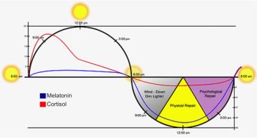 「circadian rhythm poor」の画像検索結果