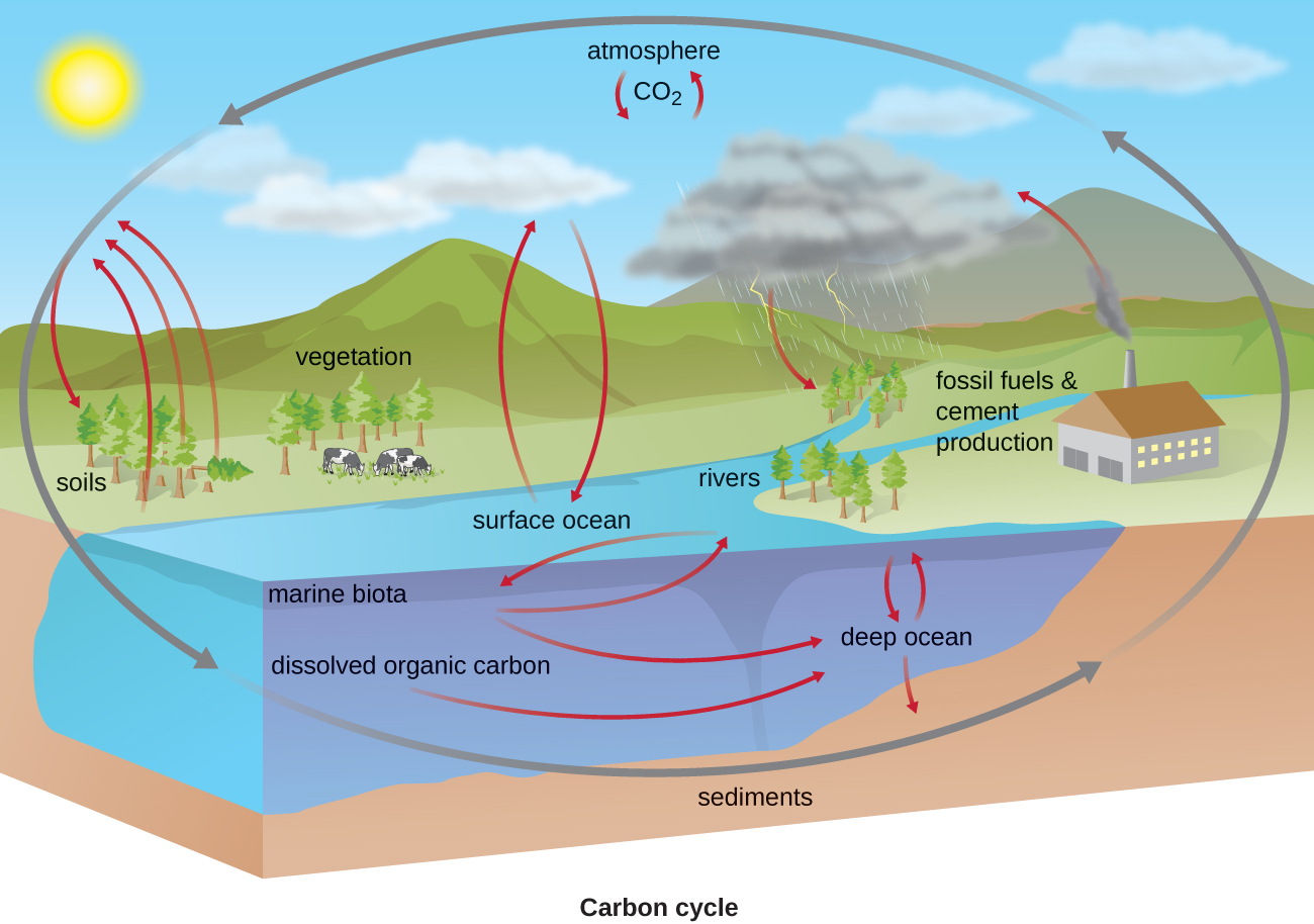 The Biogeochemical Cycle Of Which Of The Following