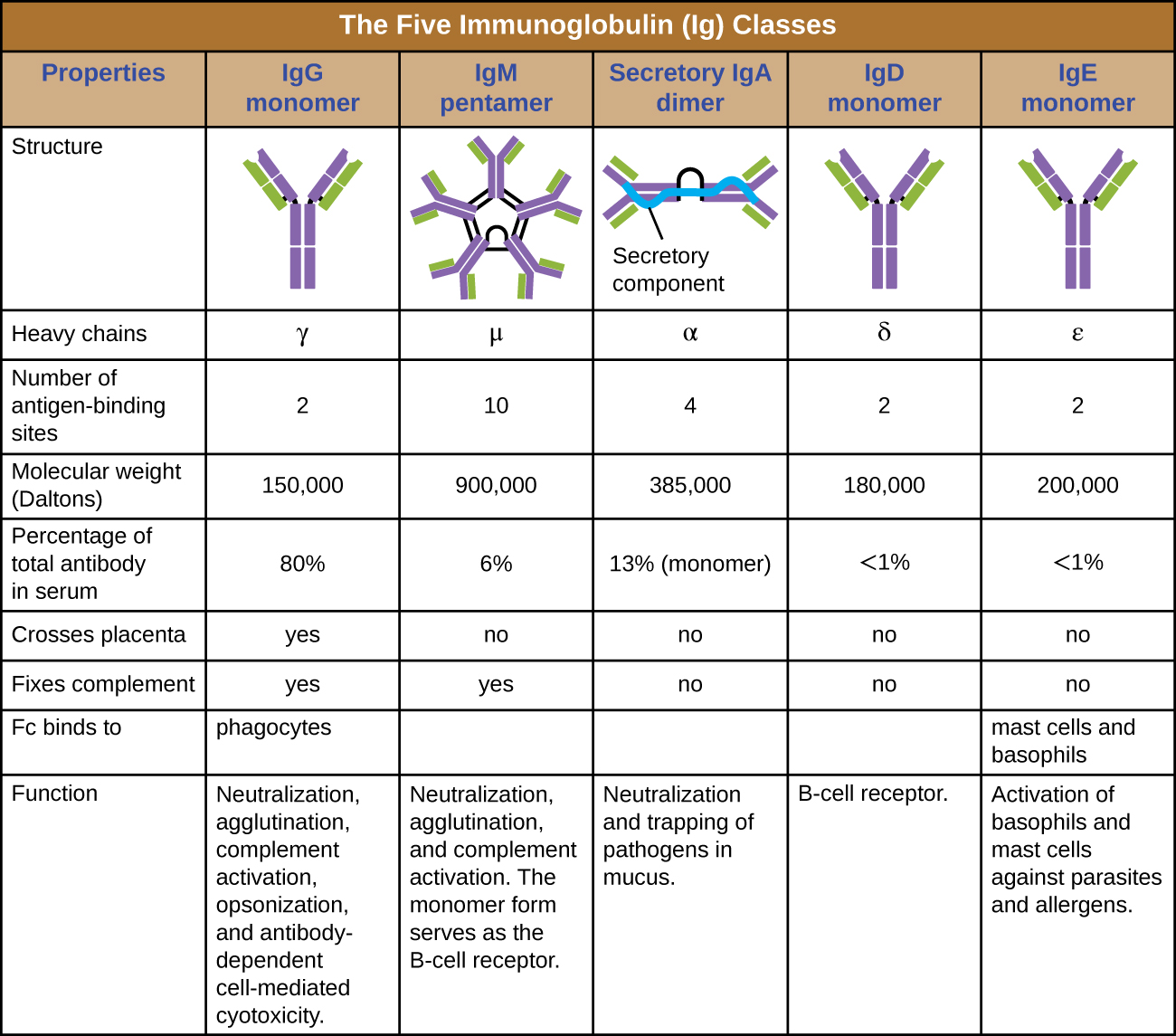 Fill In The Blank Overview Of Specific Adaptive Immunity