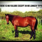 Quotes About Free Horses 41 Quotes