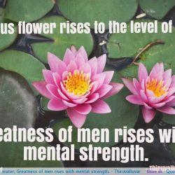 Lotus Flowers Tumblr Gardening Flower And Vegetables