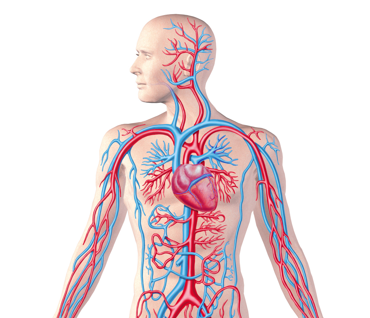 Quotes About Circulatory System 30 Quotes