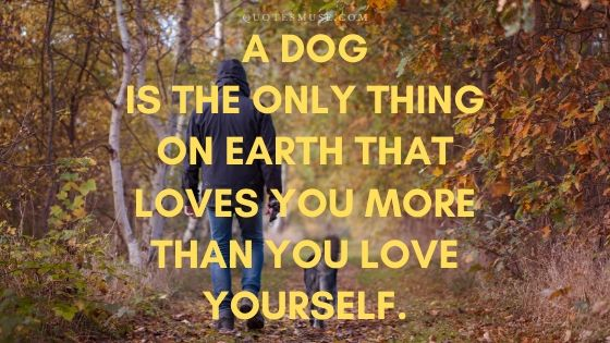 25 Best Dog Quotes for Your Cute Companion