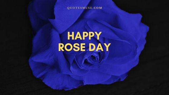 30 Happy Rose Day Images, Pics, Messages and Wishes