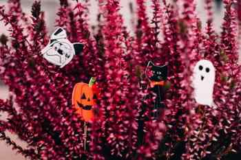 cute Halloween background images for computer