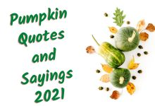 Pumpkin Quotes and Sayings Images
