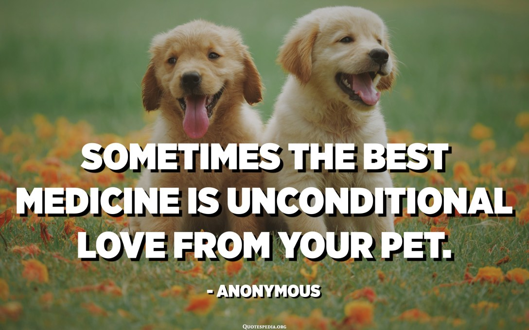 Sometimes the best medicine is unconditional love from your pet. - Anonymous