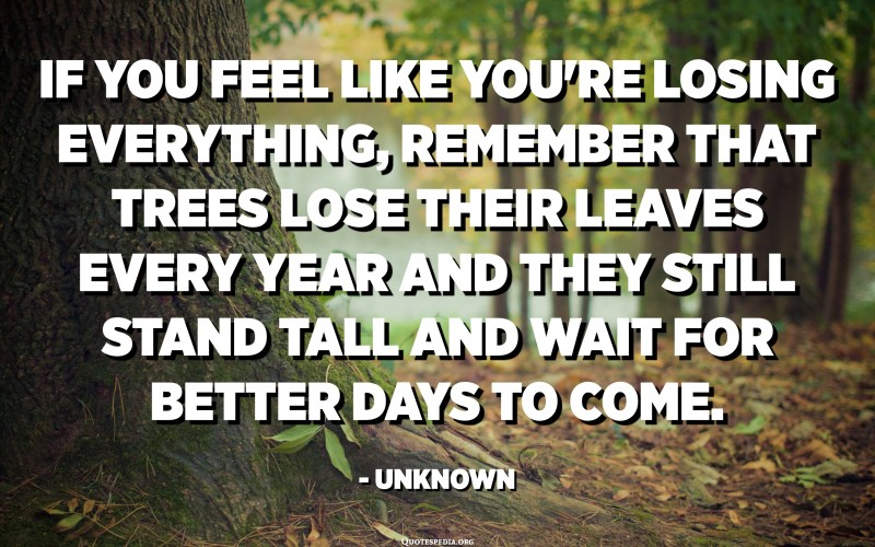 If you feel like you're losing everything, remember that trees lose their leaves every year and they still stand tall and wait for better days to come. - Unknown