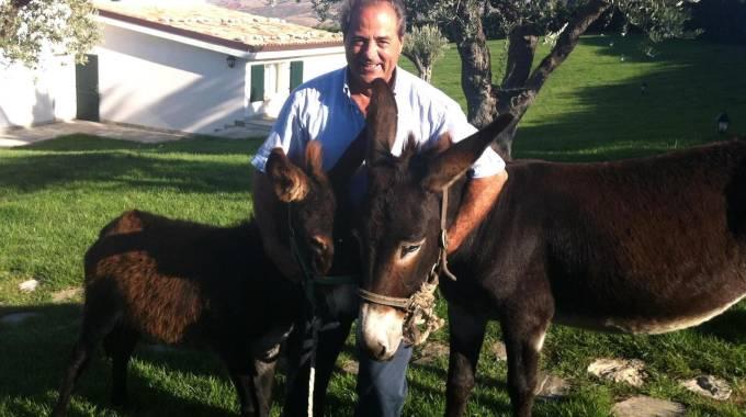 CINCINNATO Antonio Di Pietro davanti al simbolo del partito lasciato a ottobre. Sopra, con i suoi asini nella tenuta a Montenero di Bisaccia (Newpress, Ansa)