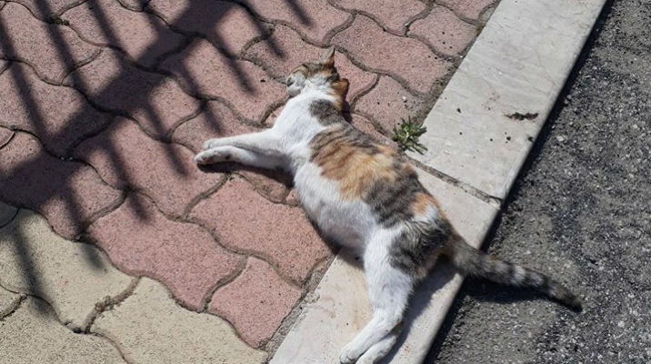 Chi avvelena gatti e cani? Messinese mette al bando esche e ...