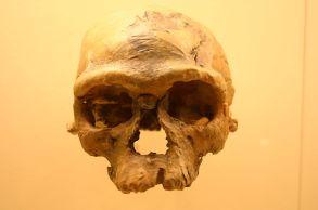 Jebel_Irhoud_1._Homo_Sapiens