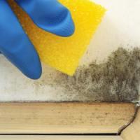 Eliminar las manchas de moho de las paredes