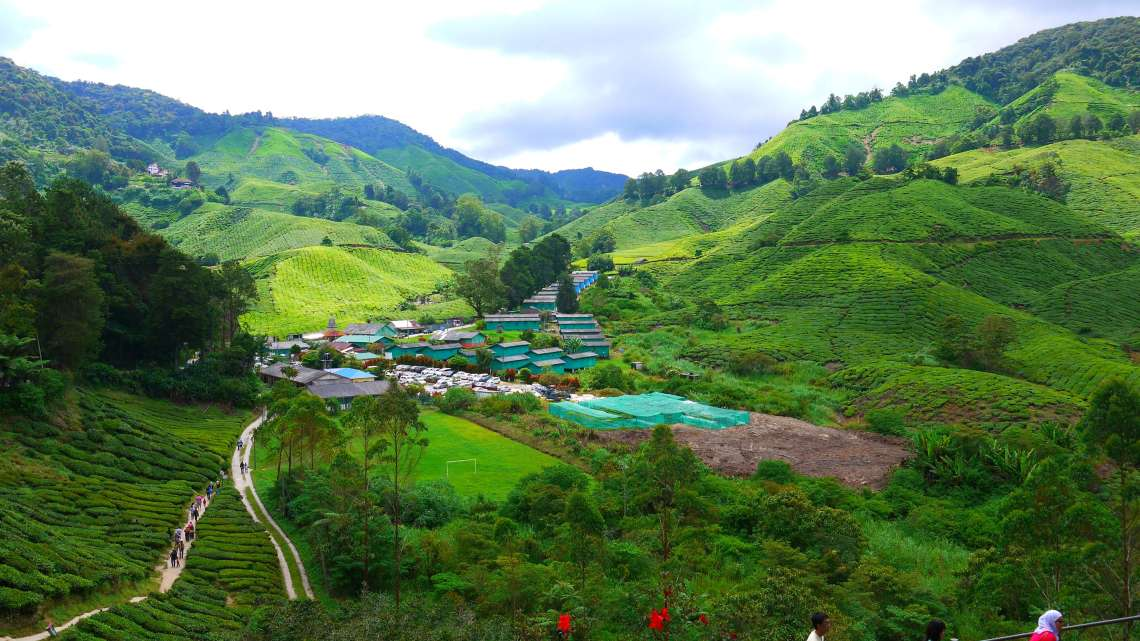 image of Cameron Highlands
