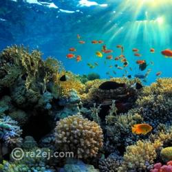 الحاجز المرجاني العظيم - إستراليا