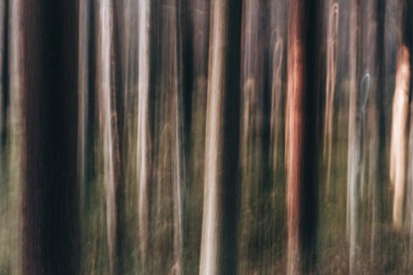 Woodland - Tiina Lämsä