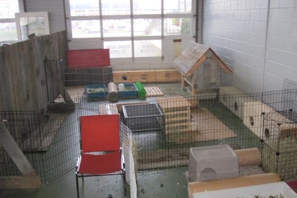 RAM-Bunny-Enclosure-1