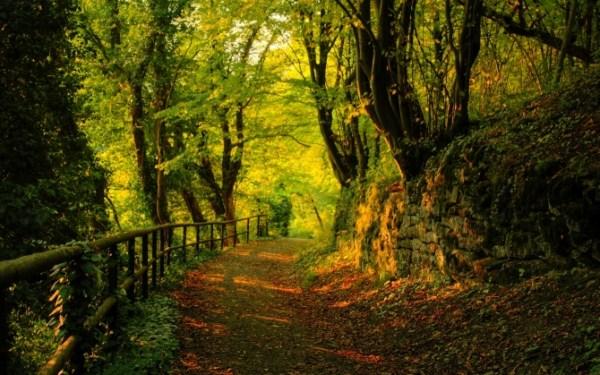 Закат в лесу обои для рабочего стола, картинки и фото ...