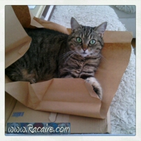 "Cleo again - ""the working cat trap"" ;)"