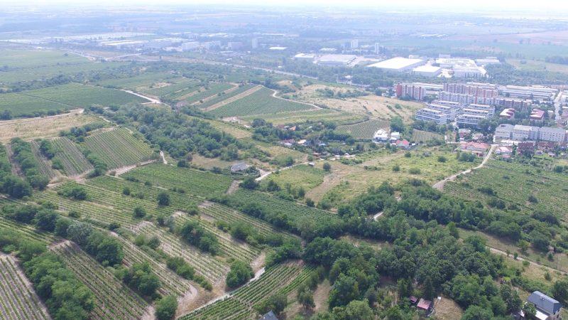 Vinohradnícka krajina v okolí Rače