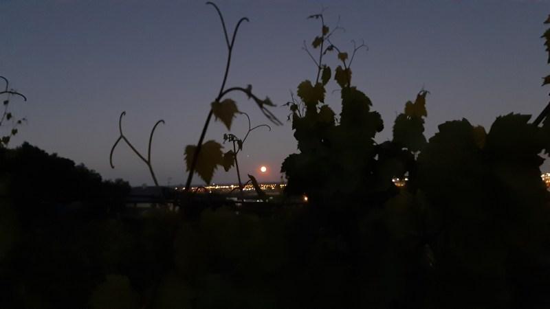 Z vinice nad Račou môžete 31. júla pozorovať kométu Neowise aj meteorické roje