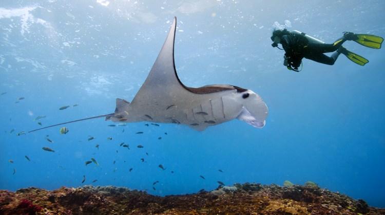 Marcel Rebro: záber z podmorského sveta pri ostrove Bali