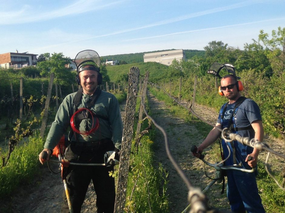 Do revitalizácie menších výmer vinohradov sa pustil aj Karol Križanovič mladší (vľavo) so svojou partou spolupracovníkov.