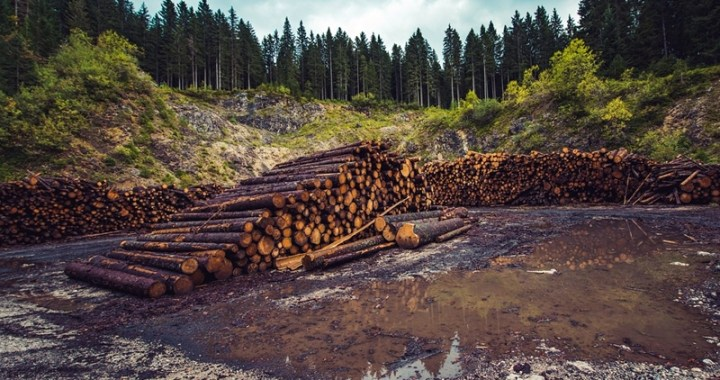 Deforestazione globale legata ai consumi